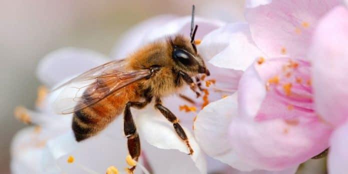 Crema al veleno d'api: guida all'acquisto