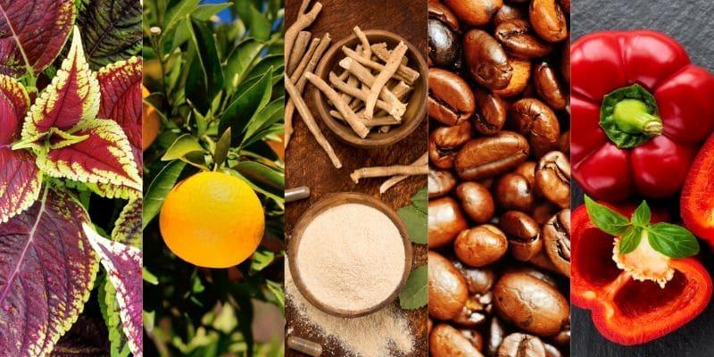 Keto Actives ingredienti