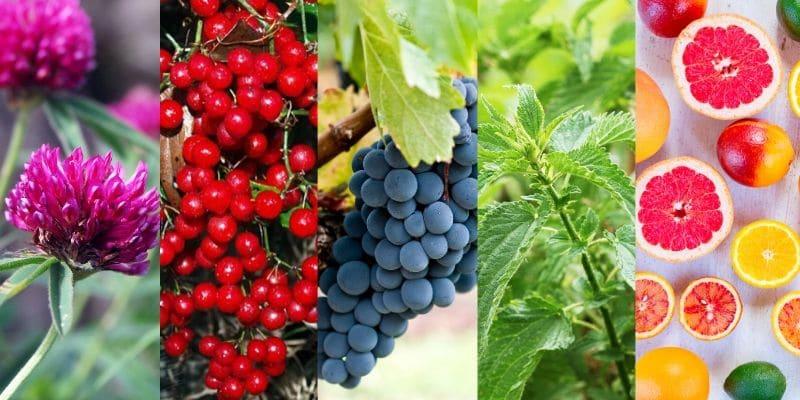 nonacne ingredienti _ trifoglio rosso, sarsapariglia, semi d'uva, foglie di ortica, vitamina c, zinco