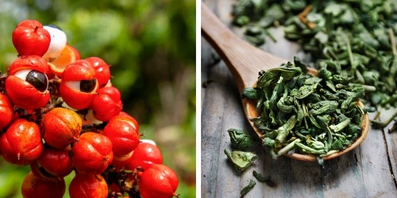 guaranà e tè verde