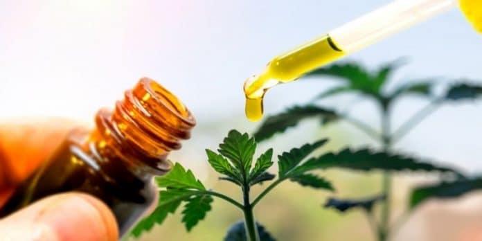 cannabisvital oil