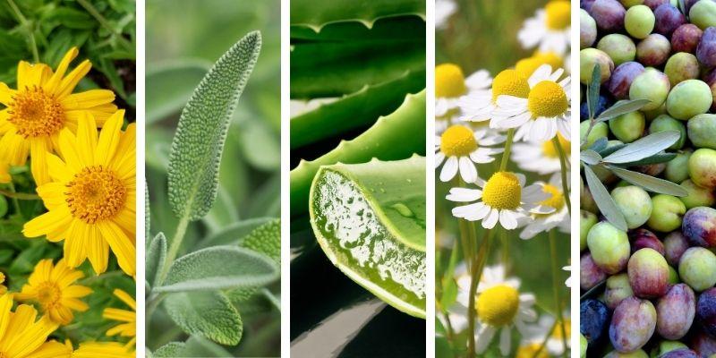 arnica, salvia, aloe, camomilla, olio di oliva