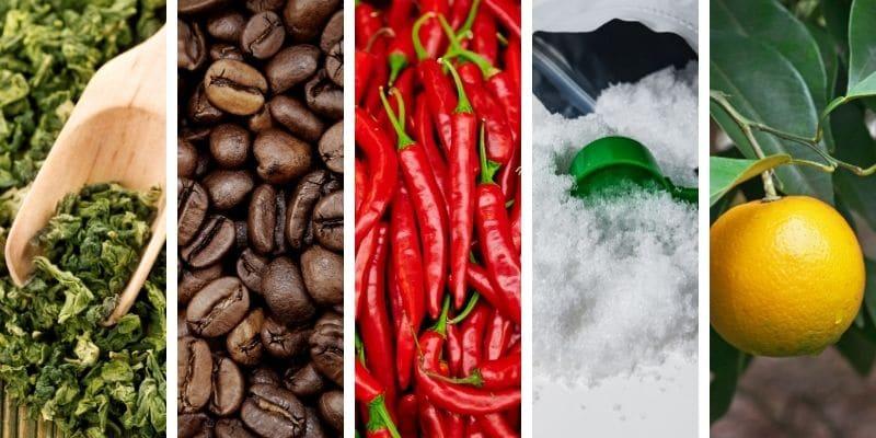 tè verde, caffeina anidra, peperoncino, acetil l carnitina, arancia amara