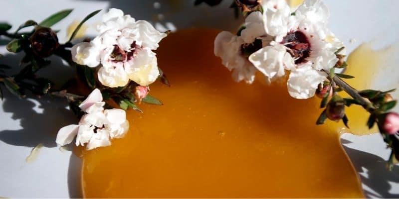 il metilgliossale si trova nel miele di manuka