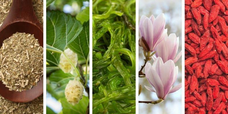 yerba mate, gelso bianco, alga wakame, magnolia, bacche di goji