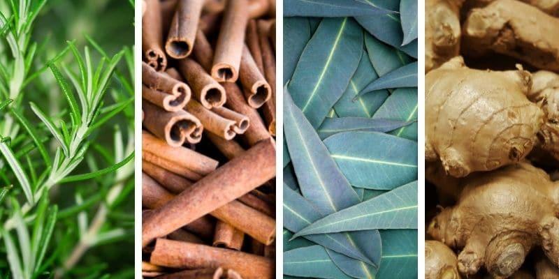 rosmarino, cannella, eucalipto e zenzero